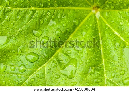 Close-up of green plant leaf water drops