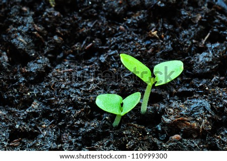 Close-up of green seedling - stock photo