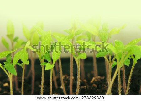 Close-up of green seedling growing out of soil. - stock photo