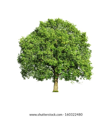 Close up of green tree isolated on white background - stock photo