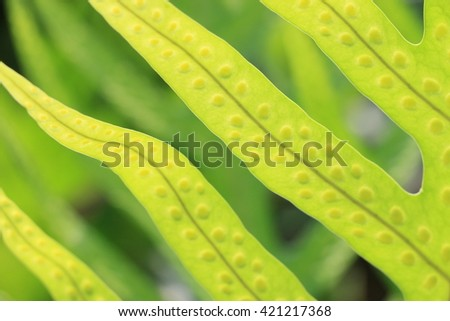 Close up of greenery fern leaves, full with spores