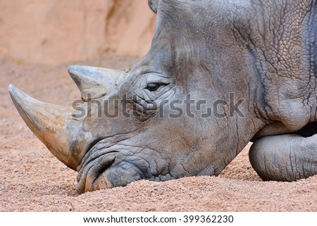 Close-up of grey rhino with big horn lying on sand - stock photo