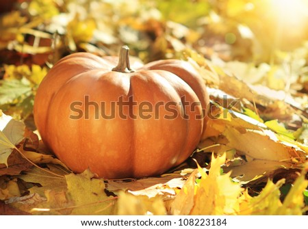 Close up of halloween pumpkin on leaves in woods - stock photo