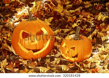 Close up of halloween pumpkins on leaves in the woods - stock photo