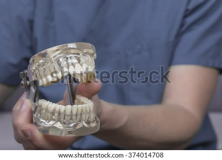 Close up of hand holding clear plastic mold with complete set of human teeth used for teaching dentistry