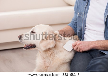 Close up of hands of man combing hair of dog at home