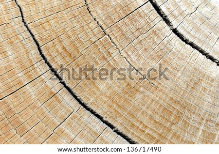 Close up of hardwood log with cracks. - stock photo