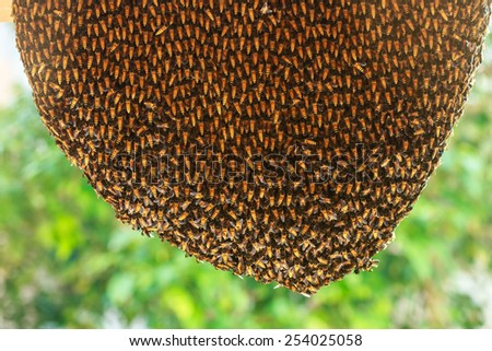 Close up of hardworking bees on hive - stock photo