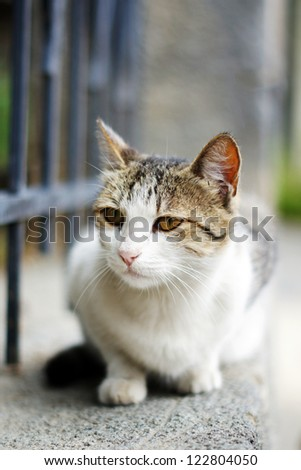 Close up of homeless kitten outdoor - stock photo