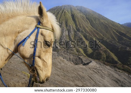 Close-up of Horse at Mount Bromo, Indonesia - stock photo