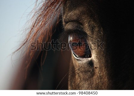 Close up of horse eye - stock photo
