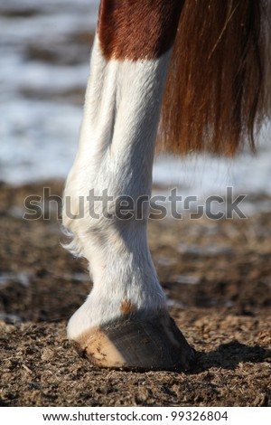 Close up of horse hind leg