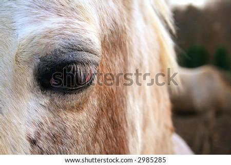 Close up of horse's eye - stock photo
