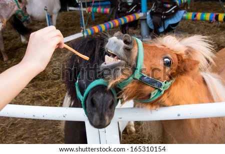 Close up of horse's mouth with bad teeth - stock photo