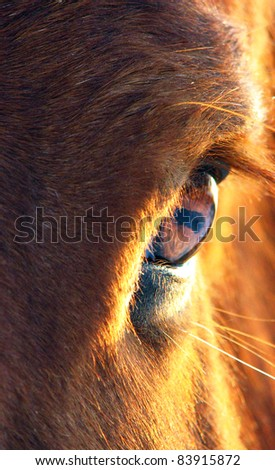 Close up of Horse staring into the field - stock photo