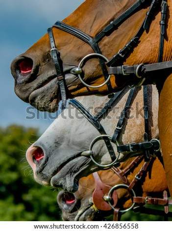 Close up of horses with bridles and bits.