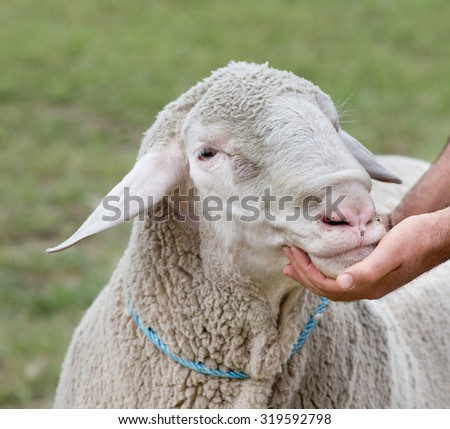 Close up of human hand holding ram's head on the exhibition - stock photo