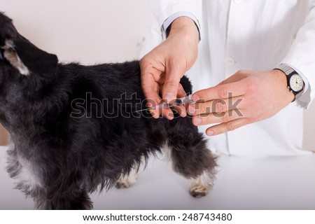 Close up of human hands giving injection to afraid dog on table - stock photo