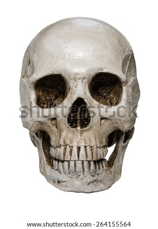 3d white skull wireframe isolated on stock illustration 158902865, Skeleton