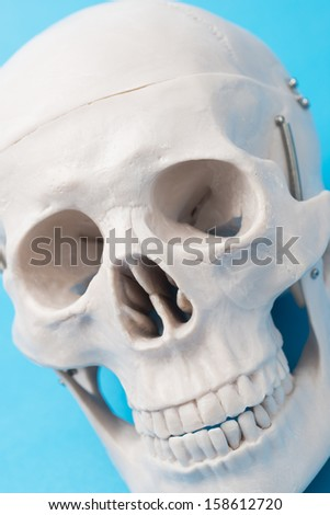 close up of human skull model