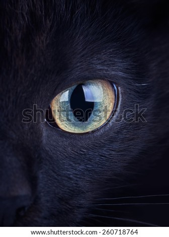 Close up of intense eye of the black cat  - stock photo