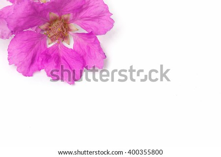 Close up of Inthanin flower or Lagerstroemia macrocarpa , pink flower. - stock photo