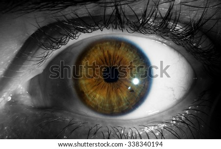 Close Up of isolated human brown Eye on greyscale