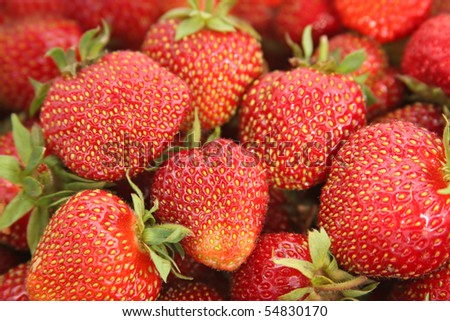 Close-up of juicy strawberries