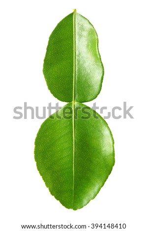 close up of kaffir lime leaves on white background - stock photo