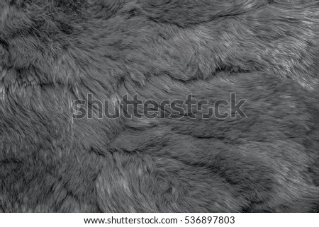 Close-up of lapin Gray fur for texture or background