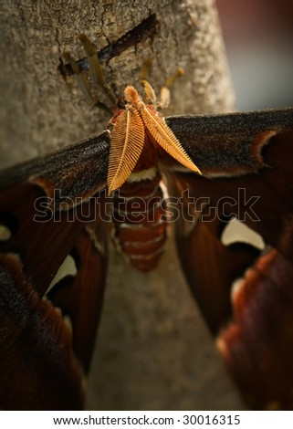 close up of large moth - stock photo