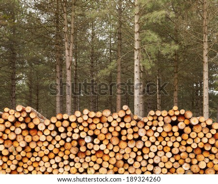 Close up of large pile of cut timber with fir trees - stock photo