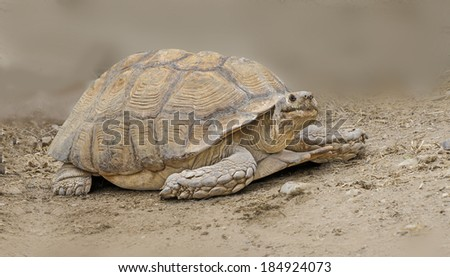 Close up of large tortoise
