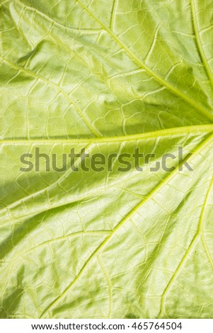 Close up of  leaves background, top view.