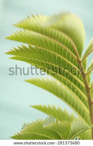 Close Up Of Leaves, fresh and green. - stock photo