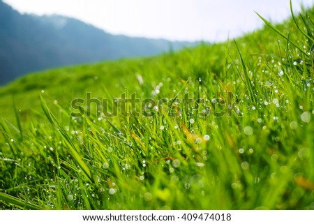 Close-up of leaves of a tender young spring green grass, awakening after the winter, which runs to the warm spring sun on a spring meadow in dew drops on a blurred background of hills in the blue haze - stock photo
