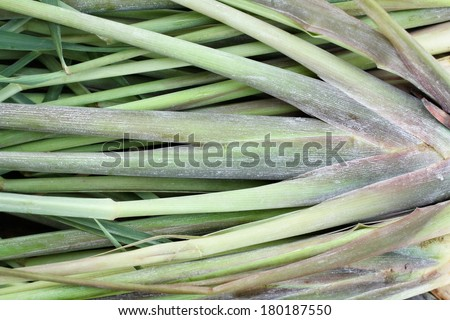 Close up of lemon grass