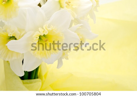 Close up of Light yellow narcissus bouquet on wrapping paper