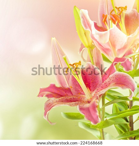 Close-up of lilly flower - stock photo