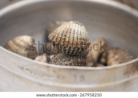 Close up of live and fresh clams or mussels for food background - stock photo