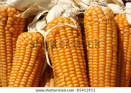 Close up of maize cobs - stock photo