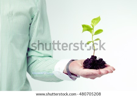 Close up of male hand holding seedling