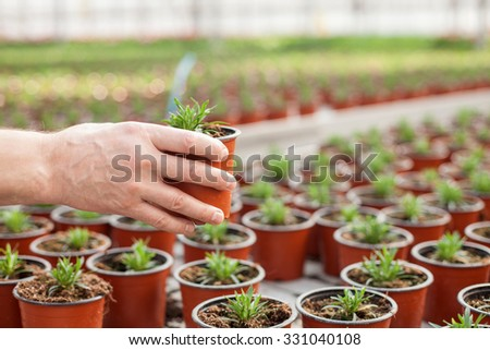 Close up of male hand of gardener holding flowerpot at greenhouse - stock photo