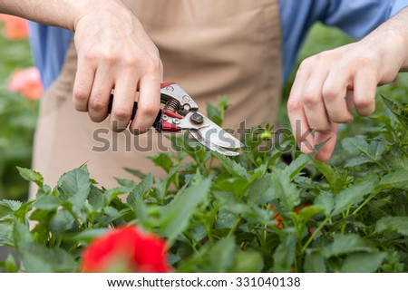 Close up of male hands of florist cutting leaves of plants at garden center. The man is standing and holding scissors - stock photo