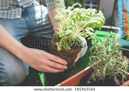 close up of man hands gardening on the balcony at home  - stock photo