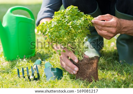 Close up Of Man's Hand Planting Plant On Garden