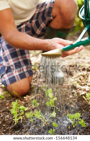 Close Up Of Man Watering Seedlings In Ground On Allotment - stock photo