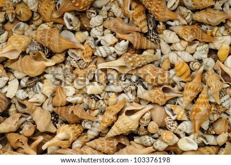 Close-up of many small seashells - stock photo