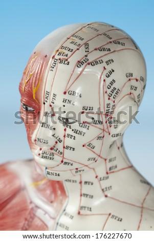 Close up of medical dummy - stock photo