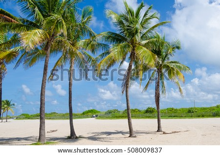 Close up of Miami Beach with Palm trees as background in Florida, USA